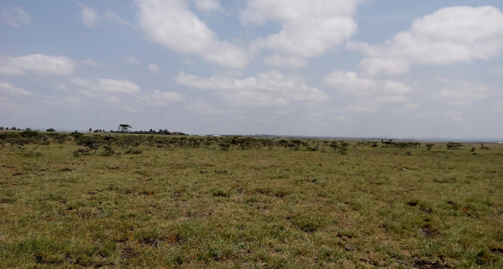 Birika – Prime 1/4 acre plot for sale in Kajiado