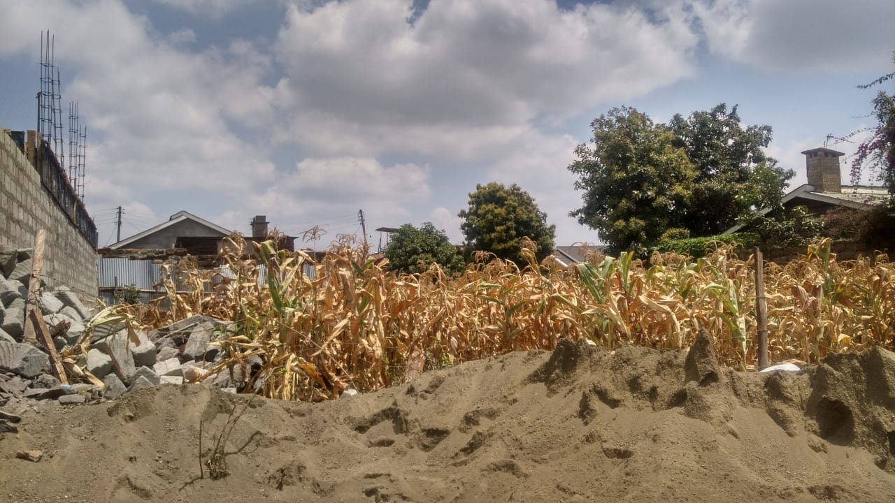 Kidfarmaco Land.