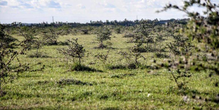 Signature Africa- Enka Vila Plainsview Komarock 3