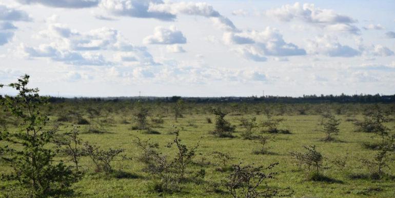 Signature Africa- Enka Vila Plainsview Komarock 4