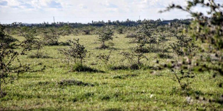 Signature Africa- Enka Vila Plainsview Komarock 5