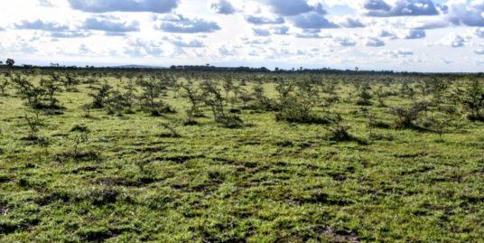 Enka Plains-View Koma