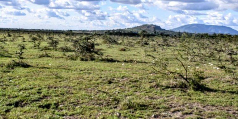 Signature Africa- Enka Vila Plainsview Komarock 6