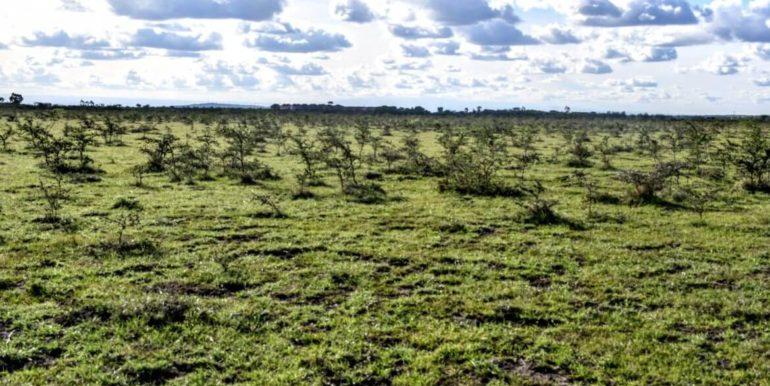 Signature Africa- Enka Vila Plainsview Komarock