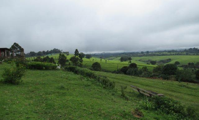 Signature_Africa_Tigoni_land_3